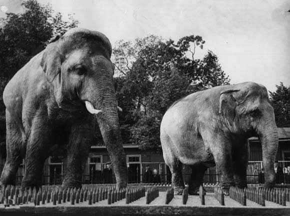 Почему парижане в 1870 году съели двух слонов из зоопарка?