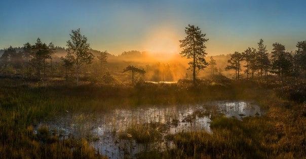 Утро на болоте. Ленинградская область.