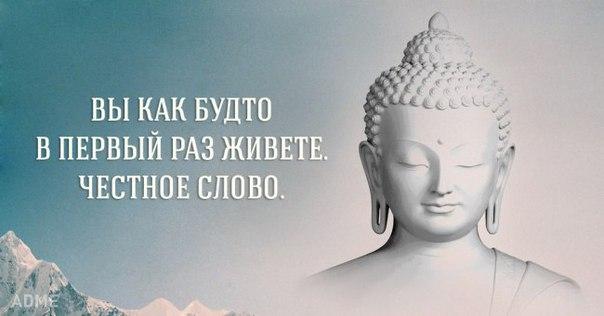 https://cs7062.vk.me/c540108/v540108951/c97f/m5JvoE32dZU.jpg