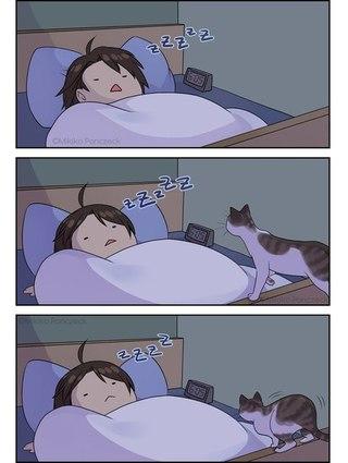 Те у кого есть кот поймут