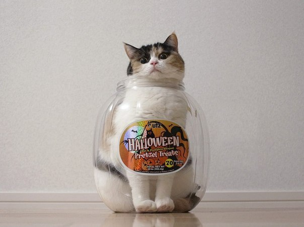 Удивительные приключения трехлитрового кота.