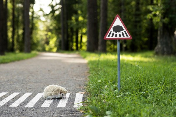 Маленькие дорожные знаки для маленьких жителей Вильнюса.