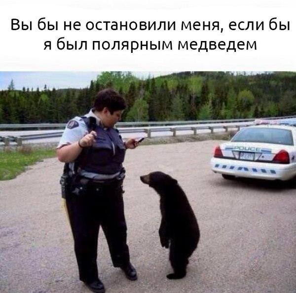 https://cs7058.vk.me/c540109/v540109929/15ae8/aHzlWK6N-gw.jpg