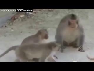 Приколы С Животными Подборка Смех До Слез!№1