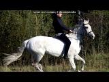 «Серые Рысаки.» под музыку KlaimSeyin - А мой смысл жизни, это конный спорт.. Picrolla