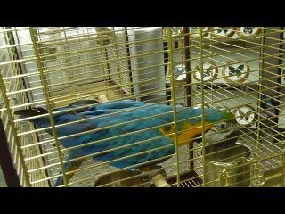 Вот такие красивые и забавные птицы!