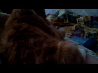 Кот-сосунец