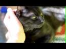 My Lounge Cat =^.^=