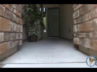 Bir köpeğin bunları yapabileceğine inanamıyorum