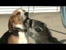енот и милая  собачка
