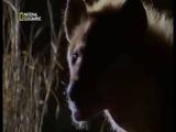 LOS_ANIMALES_MAS_PELIGROSOS_DEL_MUNDO_-_10_-_DEL_DESIERTO_A_LA_PRADERA-[YT-f18][dNgXrS3mDPM].mp4