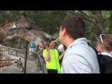 Поцелуй с жирафом)) Прикол, Таиланд 2014, Пттайя, волкин стрид, репортаж, новое видео, ххх