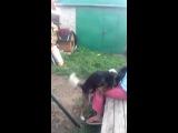 Собака трахает Киру