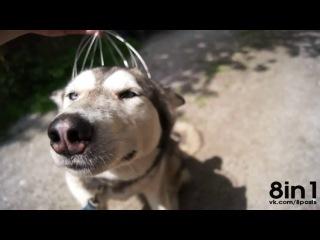 Массаж головы для собаки приколы с животными