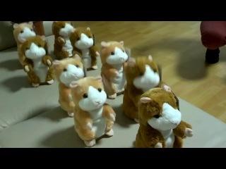 Тренировка боевого духа армии хомяков