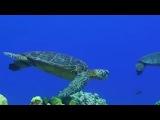Интервью Шеннен Доэрти и Холли Мари Комбз о защите морских обитателей (2014)