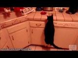 Самые смешные и неудачные прыжки и эпические полеты котов!!