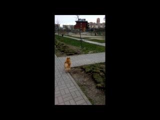 Трюфель гуляет
