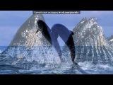 «море» под музыку mp3.riall.net - Звуки природы - Звуки дельфинов. Picrolla
