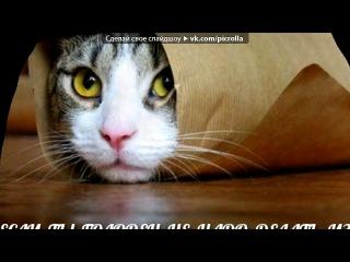 «смешные коты » под музыку зелёный мишка.))) - Гуми, цуми. Гуми маци. Гуми, гуми. Гами, гами! :))). Picrolla