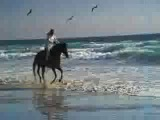 Wejh_Miwari_bin_Rawid_al_Afasi_-_Deti_v-