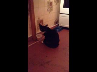 Крутой кот бетман нагло ест сметану