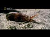 Los_Animales_Mas_Peligrosos_del_Mundo_(Norteamerica)_Documental_Naturaleza.webm-[YT-f18][PhzMaGqbW3E].mp4