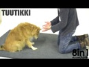 Фокусник-иллюзионист с едой обманывает СОБАК часть 2   Dogs react to magic tricks exactly like humans  Taikuutta koirille - Magic for dogs Taikuri Jose Ahonen part 2