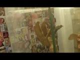 Dalida - Выставка личных вещей (3)