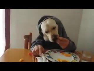 собака завтракать умеет)))