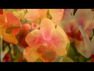 Виды Орхидеи часть 1