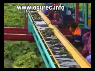 Платформа для уборки овощей, огурцов (флигер) www.ogurec.info
