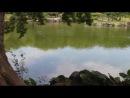 10 - Hama-rikyu Gardens - Mire intenta capturar los peces saltadores xD