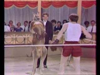Бокс Вуди Аллен против кенгуру