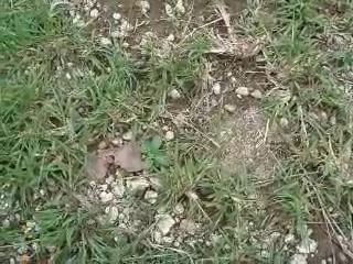 Crab bites nose -'' Краб кусает за нос''