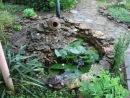 Шум водяных лилий И дождя Малюсенький прудик с лилиями на даче у подруги