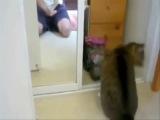 Топ 10 Смешных Видео Про Котов  [Прикол, ахахахаха, угар, коты, котейки]