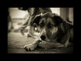 грустное видео про собак я аж плакала(