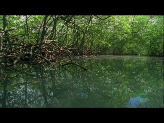 2007 | BBC: Дикие Карибы | Wild Caribbean | Зона ураганов - 03|04