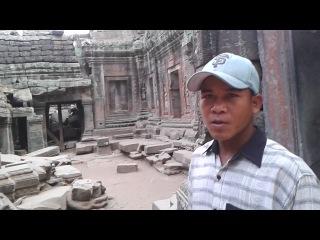 Дерево Спотри в храмовом комплексе Ангкор.
