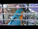 Ара. Говорящий попугай в Анапе