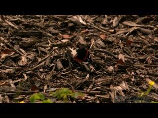 Полёт бабочки в замедленной съёмке