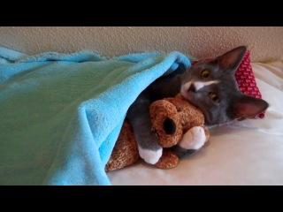 Котик любит свою мягкую игрушку :))