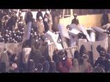 ОЛЕГ БЕЗЪЯЗЫКОВ-ПОСЛЕДНИЙ РУБЕЖ.(памяти бойцов Украинского БЕРКУТА.посвящаетца).