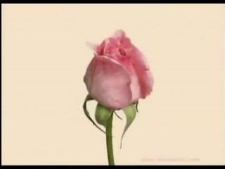 Самое_красивое_поздравление_с_8_марта_для_всех_женщин_medium