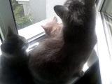 Несколько недель назад.... еще 3 котенка. Знакомство с осой.