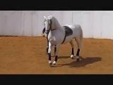 Танец андалузской лошади