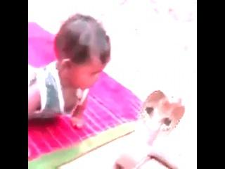 Малыш играется с коброй