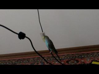 Artist kuşum