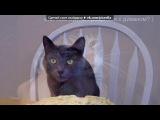 «Прикольные коты (юмор, демы)» под музыку Ромео с обочены - ОЛЕЛА   . Picrolla